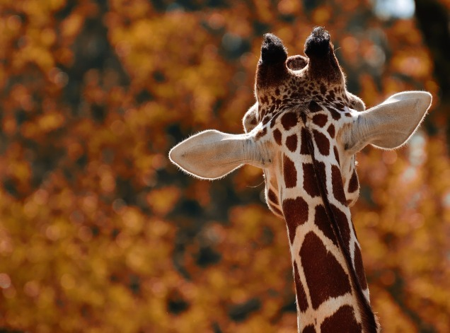 wising-up-giraffe-01